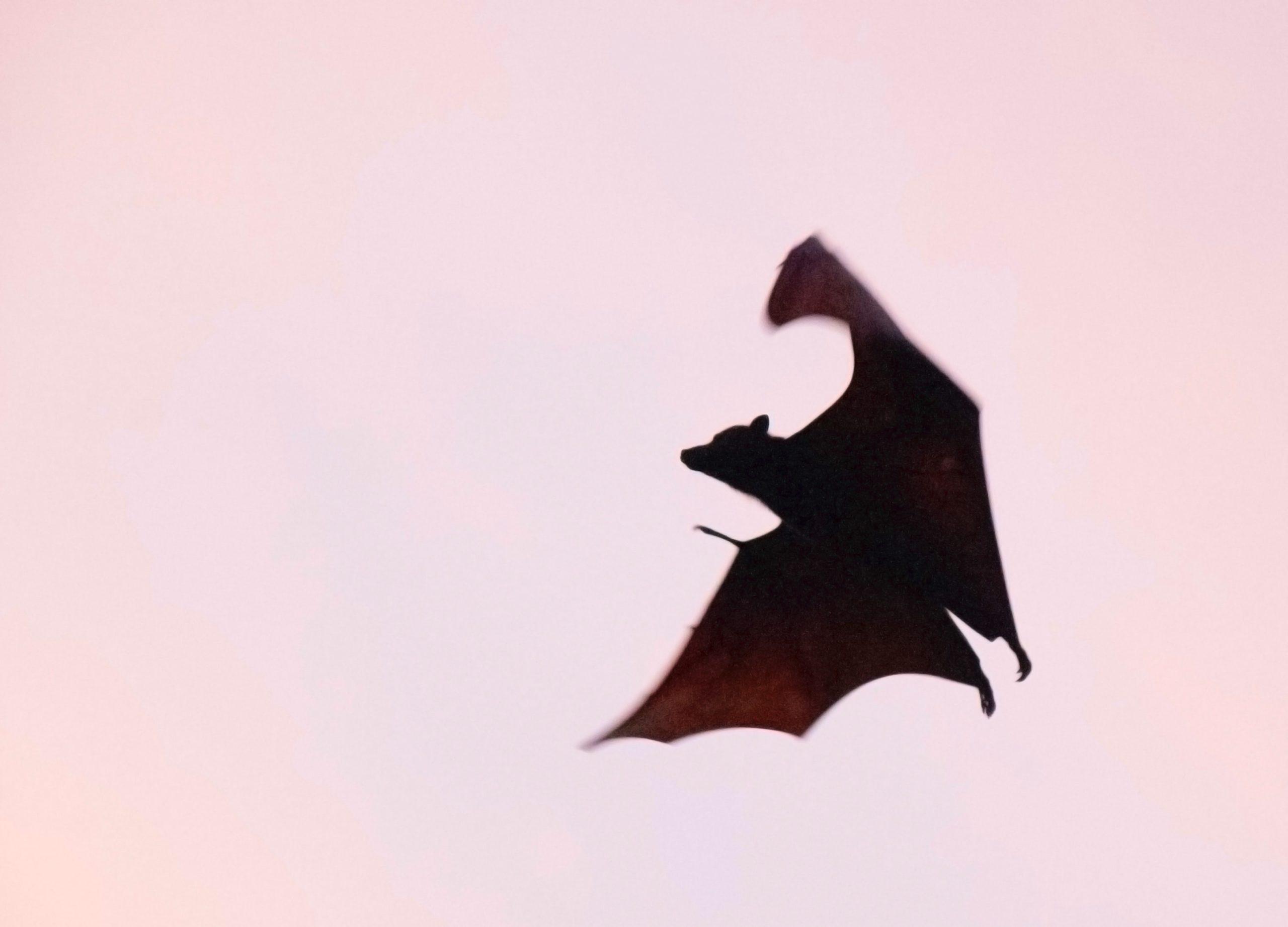 Vampire & chauve-souris : éviter les gens toxiques