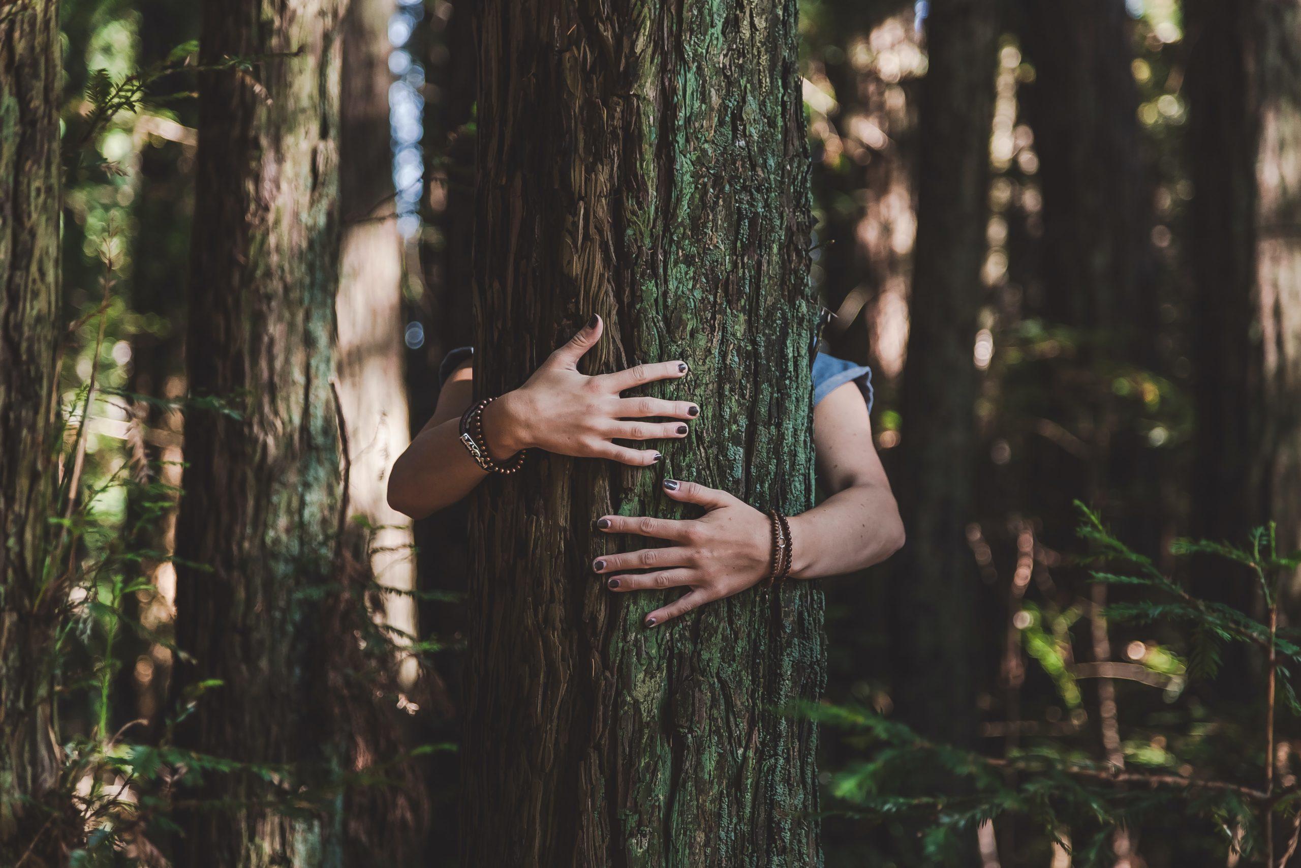 Câlin à un arbre