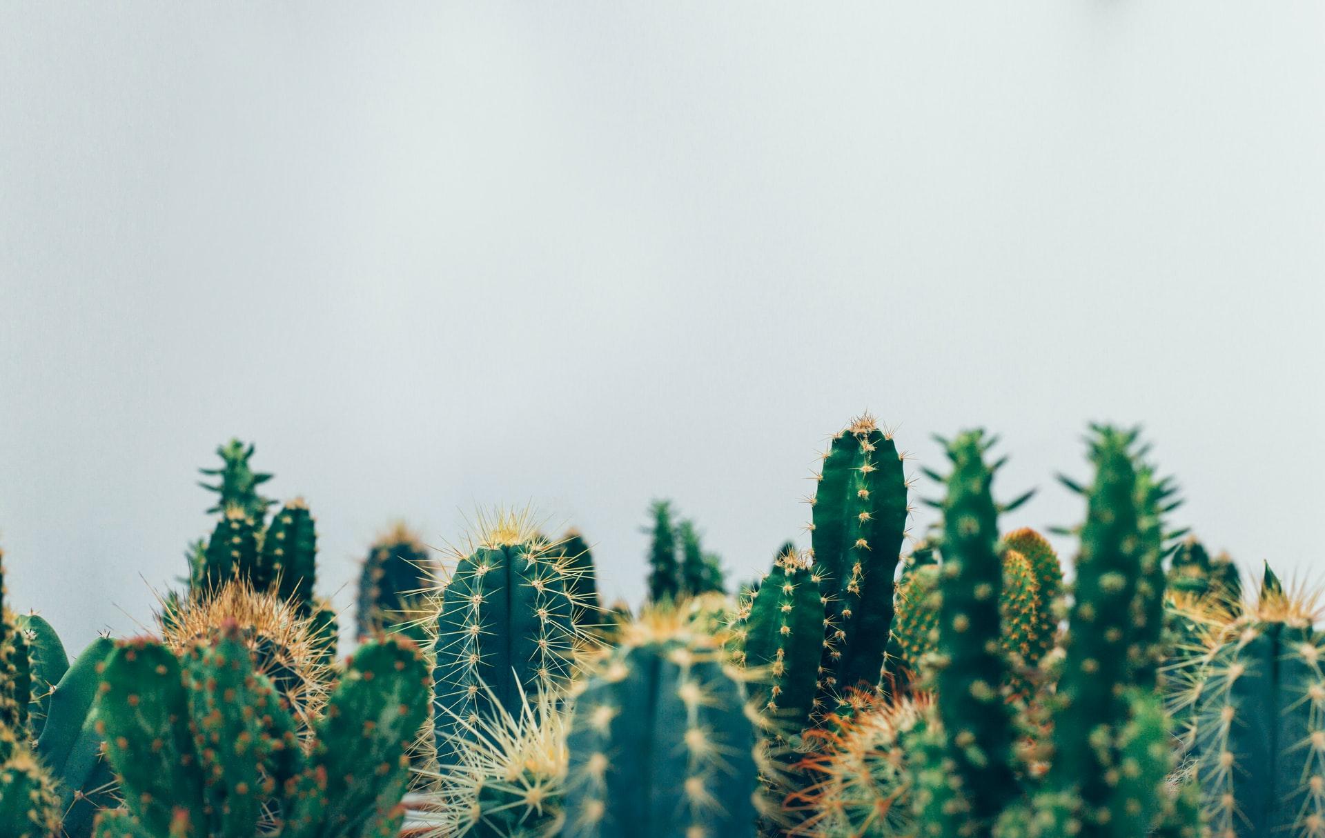 Cactus et épines - Définition d'un mécanisme de défense